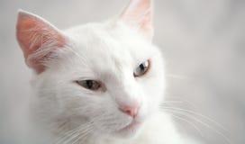 ферзь котов Стоковое фото RF