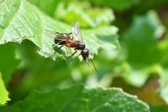 Ферзь муравья Стоковые Фотографии RF