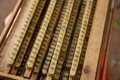 ферзь студня дома клетки пчелы королевский Стоковое фото RF