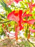 Ферзь цветя деревьев Стоковые Изображения