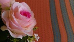 Ферзь hybrida Розы цветка поднял стоковая фотография