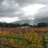 Ферма вина виноградника Стоковые Изображения RF