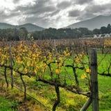 Ферма вина Стоковая Фотография