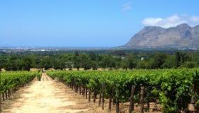 Ферма вина Стоковое Изображение