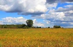 Ферма в времени осени стоковое изображение rf