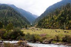 Ферма в гористой местности, Тибете, Китае стоковое изображение rf