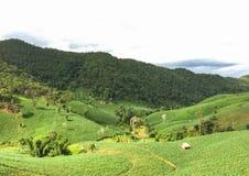 Ферма в севере Таиланда стоковые изображения