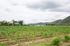 Ферма графства с небом Стоковые Изображения RF