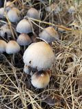Ферма гриба стоковое фото