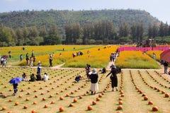 Ферма Джима Томпсона стоковое изображение
