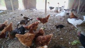 Ферма для много птиц видеоматериал