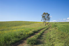 ферма евкалипта водит дорогу к валу Стоковые Фото