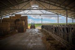 Ферма животных для еды Стоковые Фотографии RF