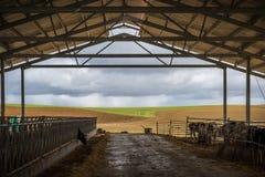 Ферма животных для еды Стоковые Фото