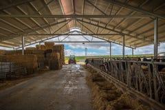 Ферма животных для еды Стоковая Фотография