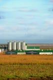 ферма животных самомоднейшая Стоковая Фотография RF