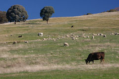 ферма животных Стоковое Изображение