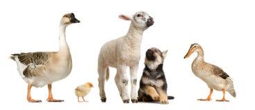 ферма животных Стоковые Изображения