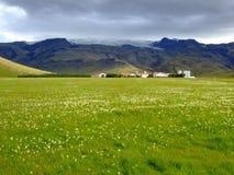 ферма Исландия Стоковые Фотографии RF