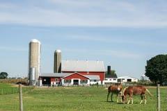 Ферма и амбар Амишей в Ланкастере, PA Стоковые Фотографии RF