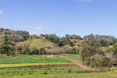 Ферма и гора Стоковая Фотография