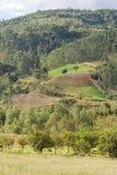 Ферма и гора Стоковые Изображения