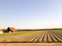Ферма и земледелие в центральной Калифорнии стоковая фотография