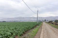 Ферма и огорода и парники около мертвого моря Стоковая Фотография