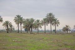 Ферма и огорода и парники около мертвого моря Стоковые Изображения