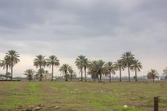 Ферма и огорода и парники около мертвого моря Стоковые Изображения RF