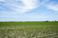 Ферма и соя Амишей field, здания, урожай, стоковое изображение