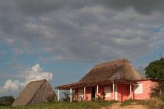Ферма и стеллажный сарай табака Стоковое Фото