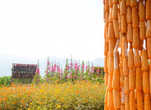 Ферма и цветок мозоли Стоковые Фотографии RF