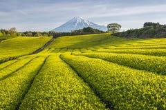 Ферма и Mount Fuji чая Стоковые Фото