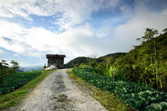 Ферма капусты на гористых местностях Камерона Стоковая Фотография RF