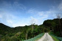 Ферма капусты на гористых местностях Камерона Стоковое Фото