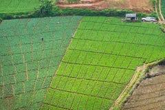 Ферма капусты на ушате Berk Phu стоковая фотография rf