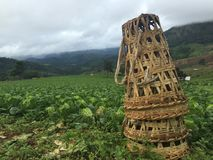 Ферма капусты с бамбуковой корзиной Стоковая Фотография