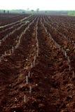 ферма кассавы Стоковые Фотографии RF