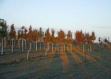 Ферма кленового листа в падении Стоковые Фотографии RF