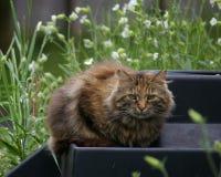 ферма кота пушистая Стоковые Фотографии RF