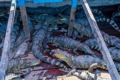 Ферма крокодила на шлюпке Стоковая Фотография