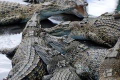 ферма крокодила Стоковые Изображения RF