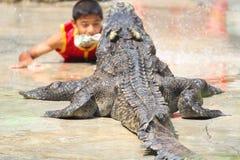 Ферма крокодила и зоопарк, ферма Таиланд крокодила Стоковые Изображения RF