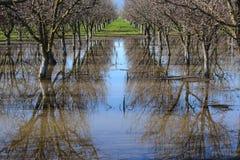 Ферма миндалины стоковая фотография