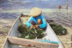 Ферма морской водоросли Стоковое фото RF