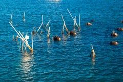 Ферма моря устрицы Стоковые Фотографии RF