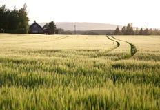 Ферма на солнечном после полудня Стоковое Изображение RF