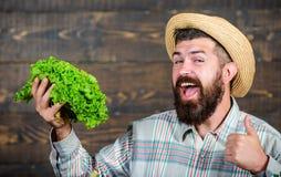 Ферма овощей покупки местная Фестиваль сбора рынка фермы Фермер человека бородатый с предпосылкой загородного стиля овощей стоковая фотография