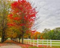 Ферма осенью 2 лошади Стоковое Изображение